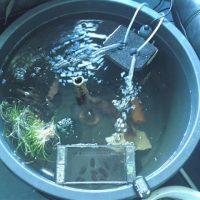 Story: Das neue Fischbecken