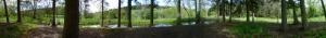 Wald beim Tiergartentunnelwanderweg